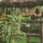 rain fall on leaf